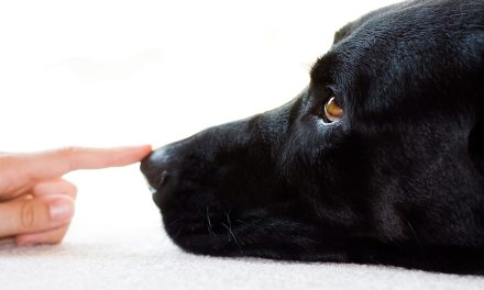 Lessons from our Black Dog. Or, moving on from depression.